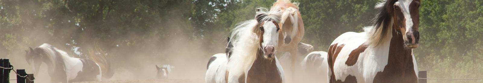 paarden-web